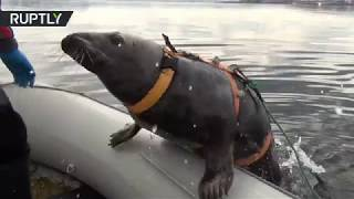 EUROPESE OMROEP | RT | This cute seal is undergoing military training for future service | 1518810767 2018-02-16T19:52:47+00:00