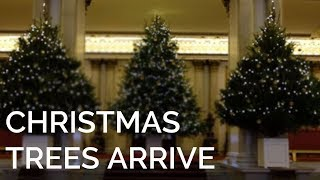 EUROPESE OMROEP | The Royal Family | The Christmas Trees have arrived at Buckingham Palace! | 1513100405 2017-12-12T17:40:05+00:00