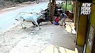 EUROPESE OMROEP | New York Post | Cow rams two kids playing outside their house | New York Post | 1518800010 2018-02-16T16:53:30+00:00