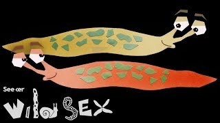 EUROPESE OMROEP | Seeker | If You Think Your Sex Life Is Tough, Try Being A Slug | 1518462008 2018-02-12T19:00:08+00:00